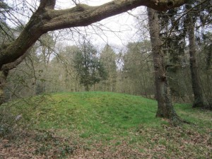 Zwanemeerbos, 'Konijnenberg' Grafheuvel 2016-04-09 15.50.49 foto H.E.Delicaat